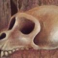 conveyance-detail-skull